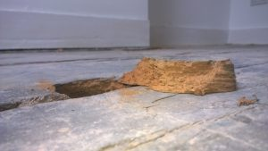 Woodworm treatment in Bournemouth Poole Weymouth Swanage Dorchester Wimborne Bridport Chrischurch Dorset Hampshire Wiltshire Somerset