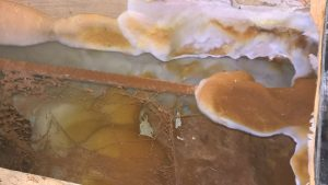 Dry rot outbreak in Bournemouth Poole Weymouth Swanage Dorchester Wimborne Bridport Chrischurch Dorset