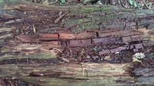 Rotten timber see how as the wet rot attacks the wood it cracks