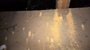 Our woodworm treatments will help Weymouth customers get rid of their woodworm in the loft or floorboards