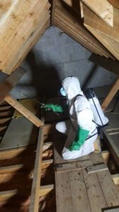 Woodworm treatment for lofts in Dorset, Hampshire, Wiltshire, Somerset