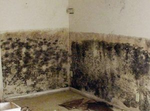 Damp information about health hazards caused by long term damp problems