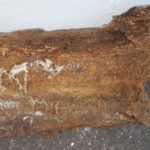 Be Dri Dry Rot Treatment in a property in Bournemouth 10