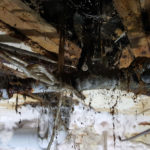 Be Dri Dry Rot Treatment in a property in Bournemouth 5